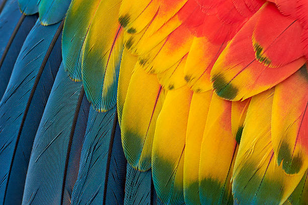 colorful macaw plumage - animal markings stock photos and pictures