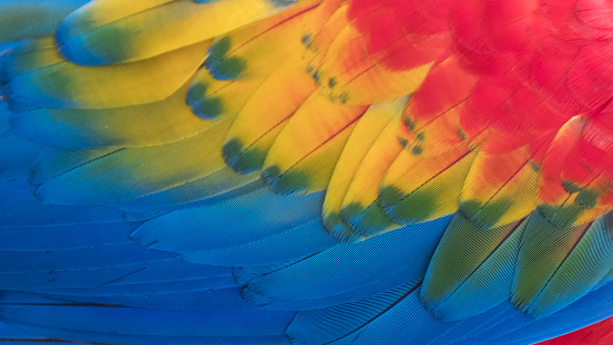 Colorful Macaw Plumage