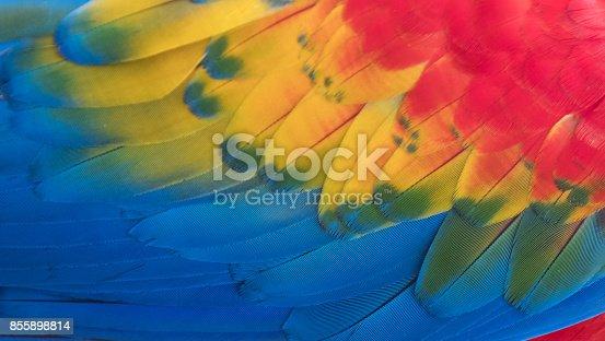 istock Colorful Macaw Plumage 855898814