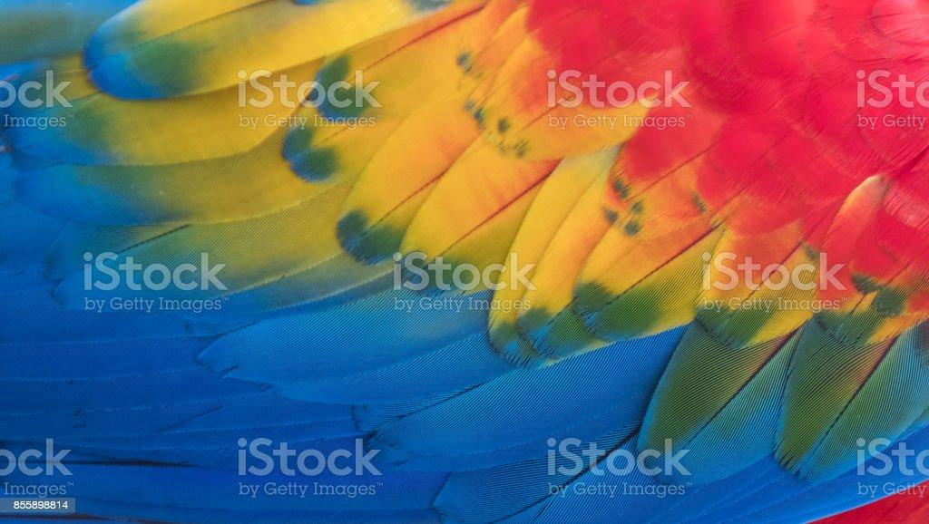 Arara colorida Plumage - foto de acervo