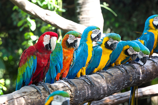 Colorful Macaws Stock Photo - Download Image Now