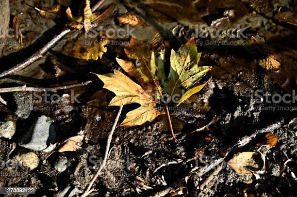 Photo of Colorful Maple Leaf