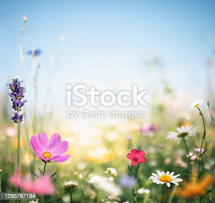 istock Colorful Meadow 1295797184
