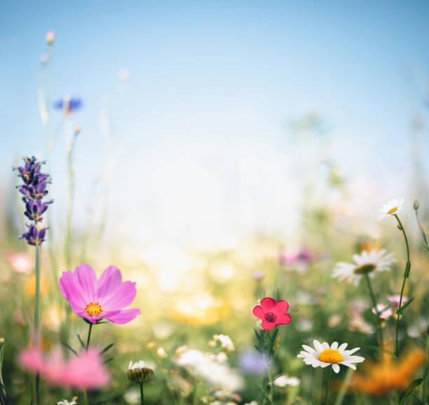 Colorful Meadow stock photo