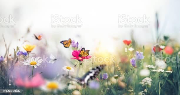 Colorful meadow with butterflies picture id1205668037?b=1&k=6&m=1205668037&s=612x612&h=t5mikrtyganqmbu ivb5jlb5fodyzw1jmkl4lx nale=