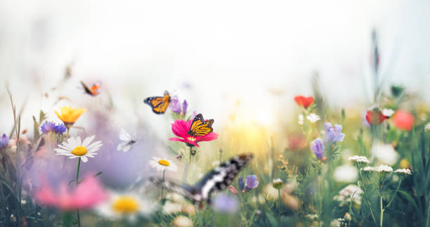 Colorful Meadow With Butterflies stock photo