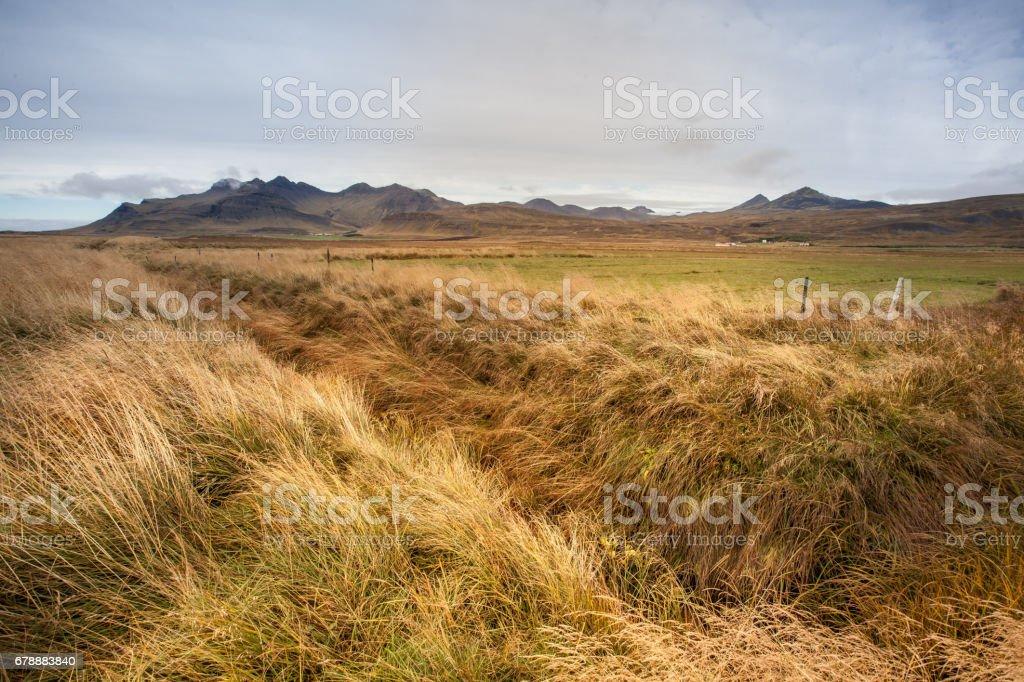 Renkli çayır çimen ön ile. Büyük kayalık dağ içinde belgili tanımlık geçmiş. Güzel manzara ve İzlanda'daki zorlu doğa. royalty-free stock photo