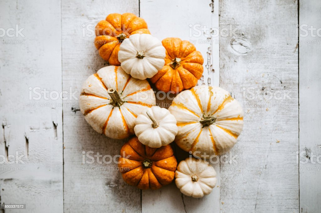 Colorful Mini Pumpkins on Wood stock photo