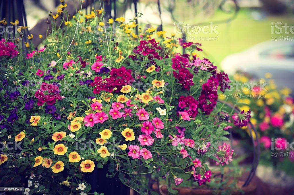Farbenfroher jährlich im Frühjahr Sommer Blumen Überquellen Blumenampel – Foto