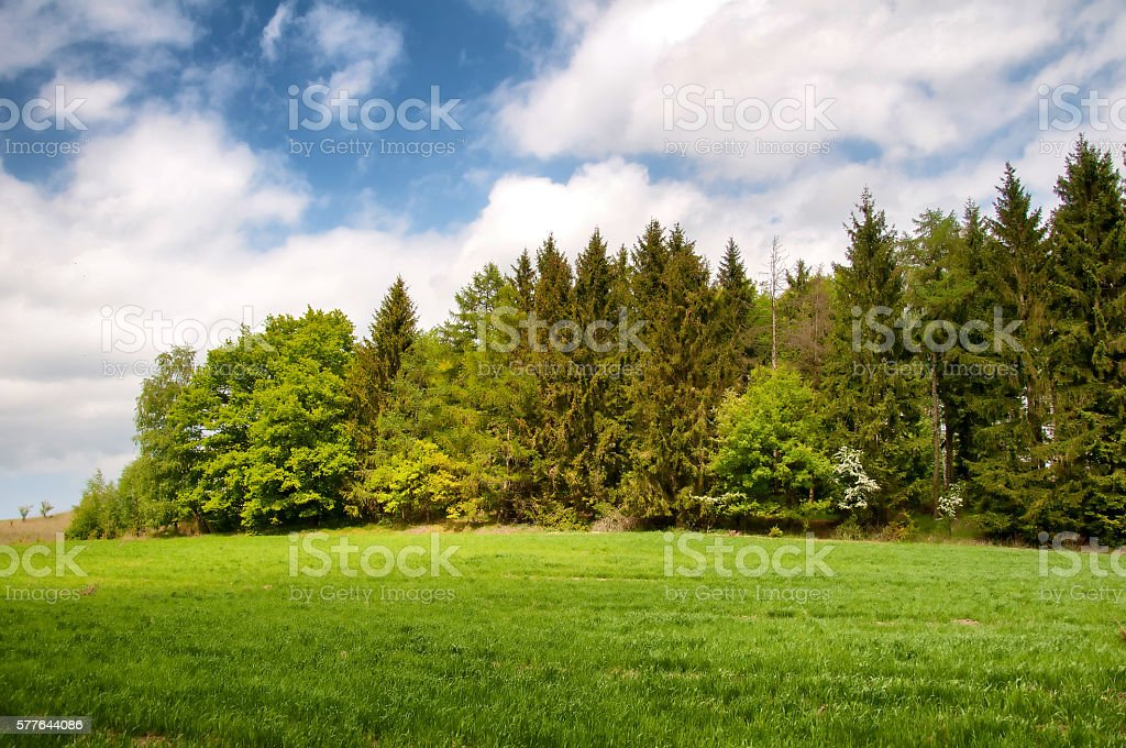 Colorful mixed forest on a sunny day stock photo