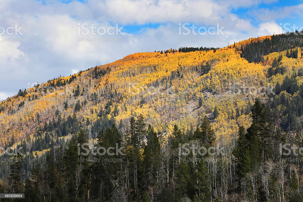 Colorful Mountain Side with Fall Colors stock photo