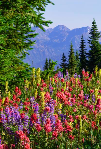 Colorful Mountain Wildflowers stock photo