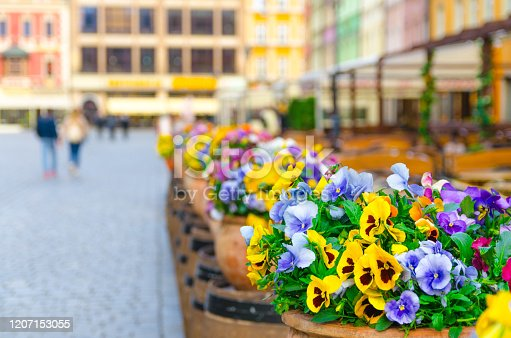 Colorful multicolored flowers pansies in pots on Rynek Market Square in old town historical city centre of Wroclaw, blurred buildings, Poland