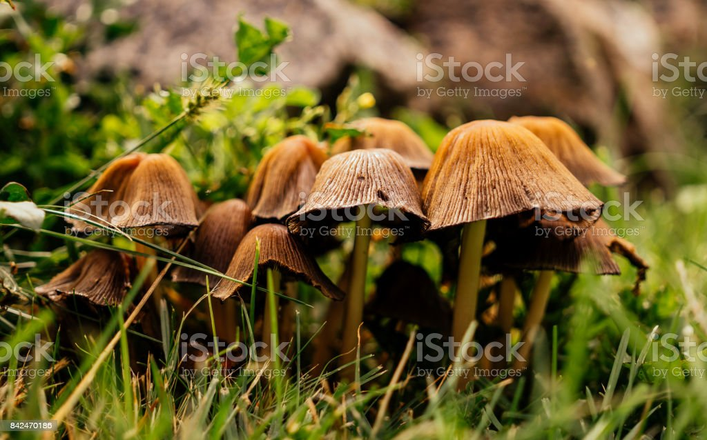 Colorful mushroom meadow in the autumn forest stock photo