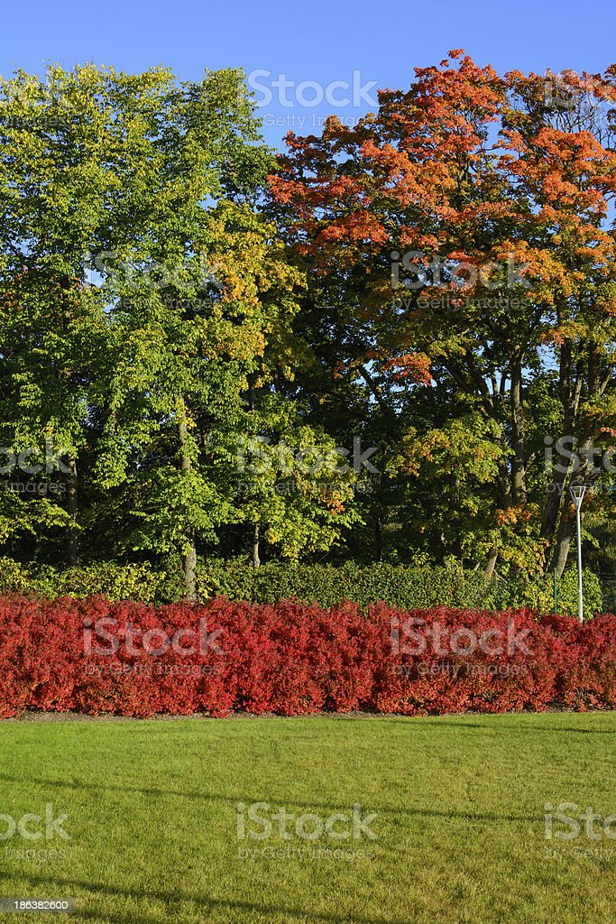 Colorful nature in the autumn royalty-free stock photo
