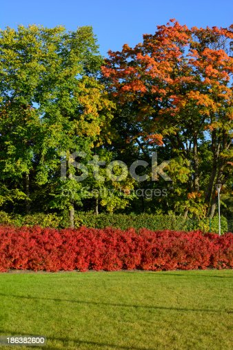 Colorful Nature In The Autumn Stock Photo & More Pictures of Autumn