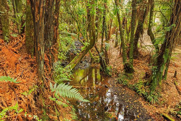 Colorful New Zealand bush stock photo