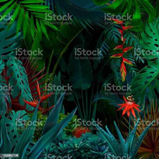 Colorful night jungle background picture id1056667138?b=1&k=6&m=1056667138&s=612x612&h=3m3ifywvphz8hbbdiffz5 w1vfc7gwileg0qwh9umwg=