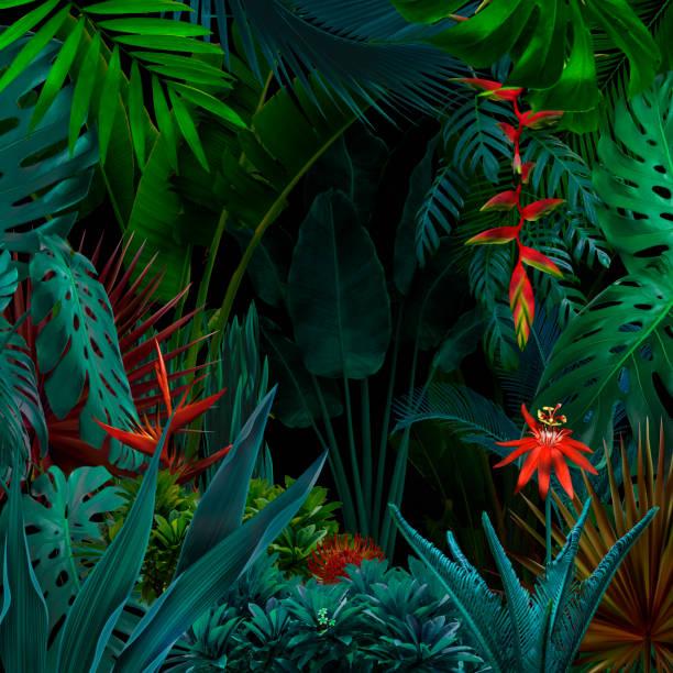 fundo de selva de noite colorida - flor tropical - fotografias e filmes do acervo