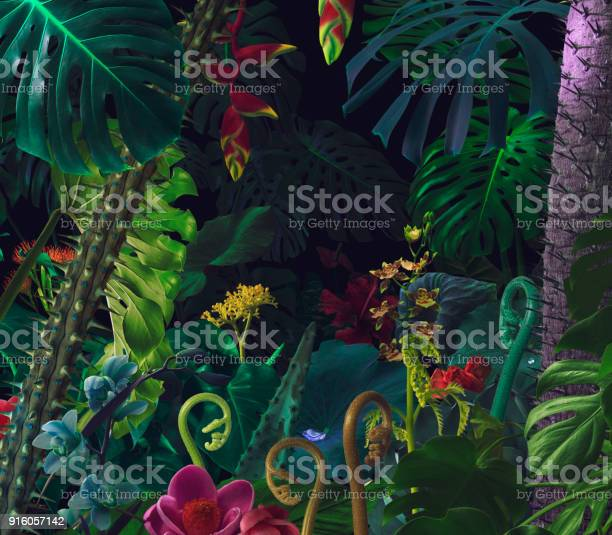 Colorful night jungle background picture id916057142?b=1&k=6&m=916057142&s=612x612&h=2mcv2hbkj5ld8nmxmnksqokw5s9gy0ih4fcju1sfxxc=
