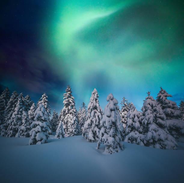 färgglada norrsken över snötäckta träd - northern lights bildbanksfoton och bilder