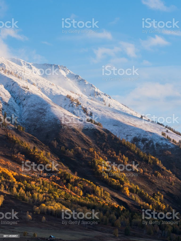 Colorful of autumn forest and white snow on mountain from sunrise time in Hemu village, Xinjiang, China stock photo