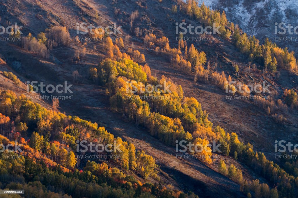 Colorful of autumn forest on mountain from sunrise time in Hemu village, Xinjiang, China stock photo