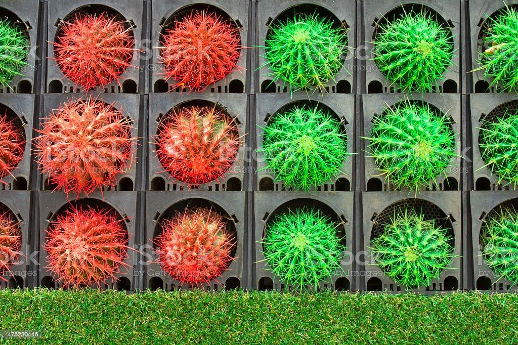 Bunte der cactus – Foto