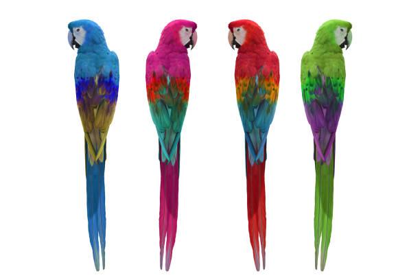 kleurrijke van ara - ornithologie stockfoto's en -beelden