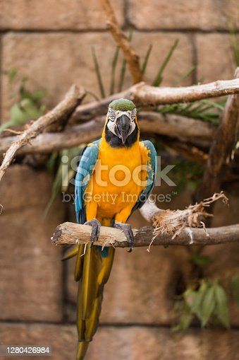 Colorful Orange and Blue Parrot Sitting on a Tree Branch