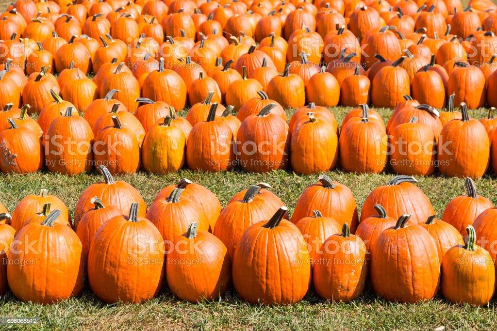 Bunte orange Kürbisse in einem Feld – Foto
