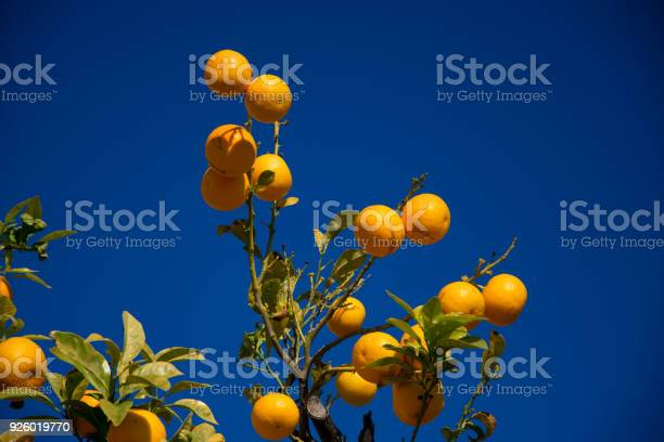 Colorful orange tree in arcos de la frontera picture id926019770?b=1&k=6&m=926019770&s=612x612&h=vloh3srpiambeti55jttwvlwsvndllzh4wgq69btsmq=