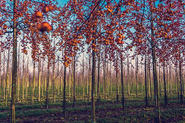 Colorful Orchard stock photo