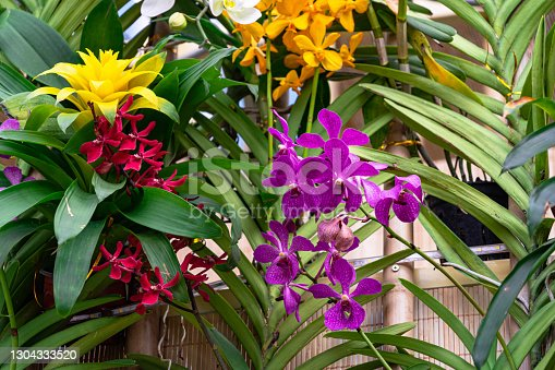 Colorful orchid spring time garden field