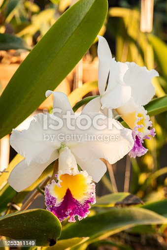 Colorful orchids on a beautiful background.