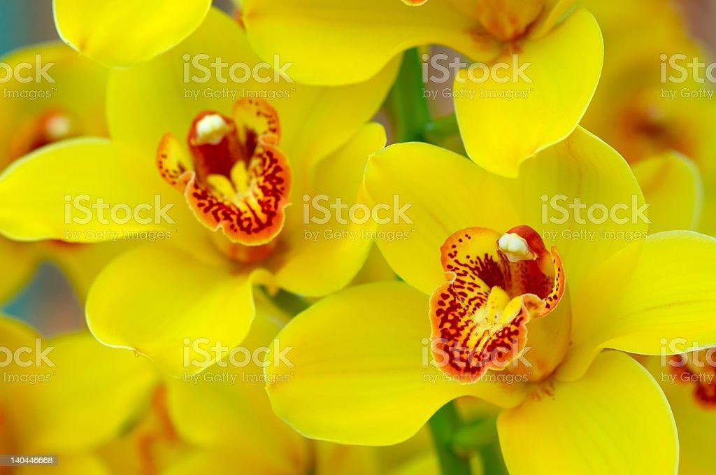 Bunte Orchideen – Foto