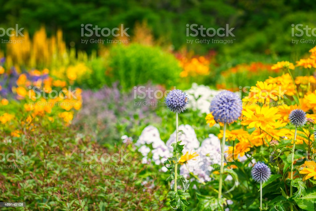 Colorful Ornamental Garden Flower beds and bees stock photo