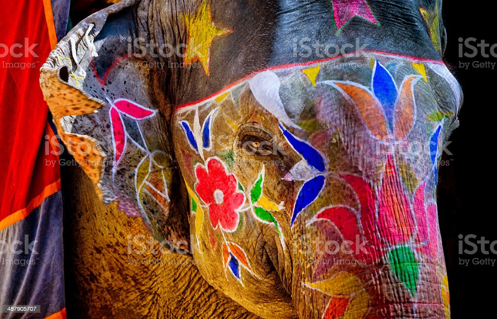 colorful painted Elephant in India stock photo