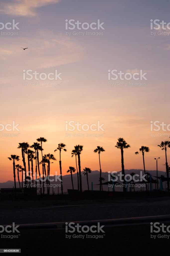 Colorful Palm tree - Royalty-free Beach Stock Photo