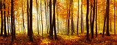 istock Colorful Panorama of Autumn Beech Tree Forest Illuminated by Sunlight 498892962