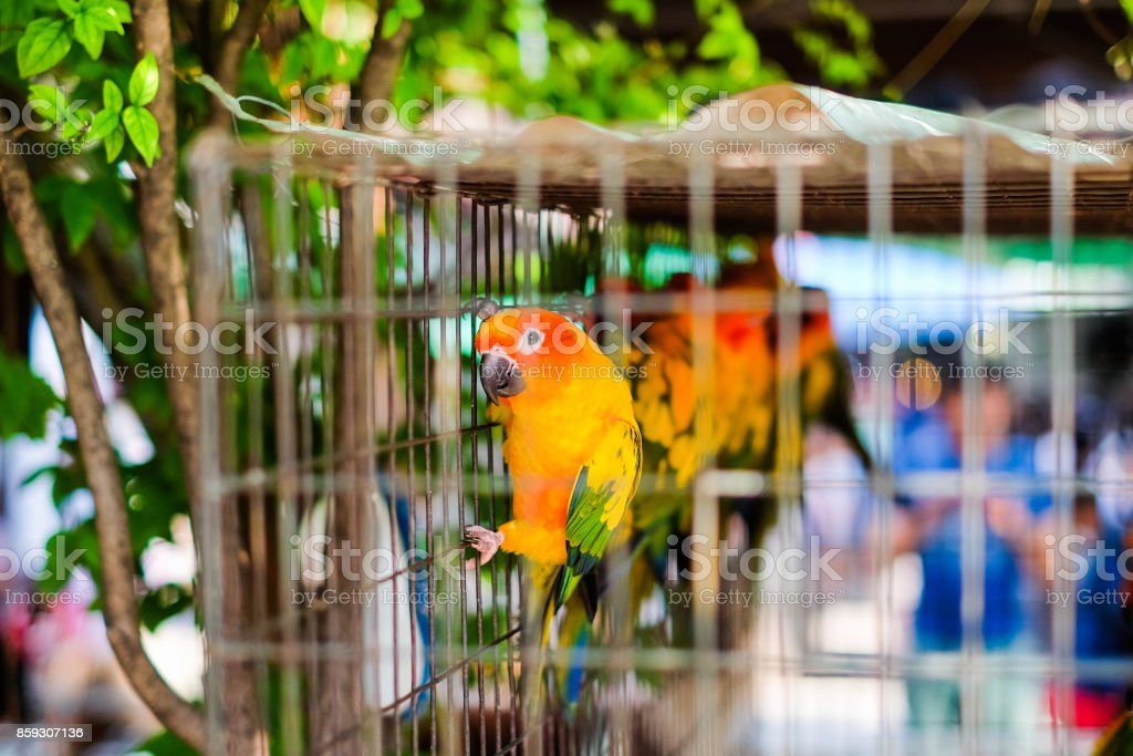 Colorful parrot in steel cage for animal background or texture - Pet concept. stock photo