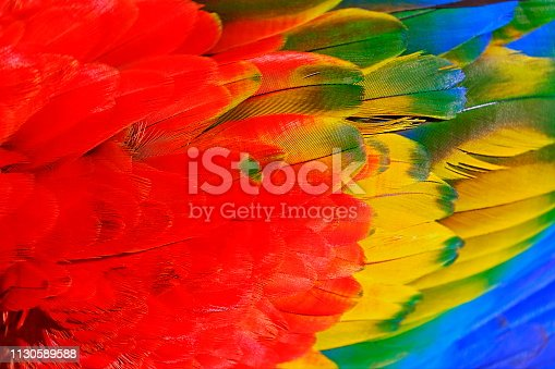 Colorful Parrot macaw tropical bird plumage natural pattern – Pantanal wetlands, Brazil