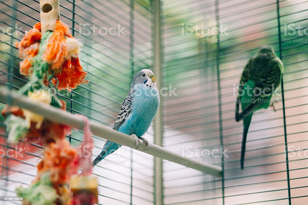 Colorful parrots birds stock photo