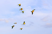 Colorful parrots flying in the sky. Freedom concept