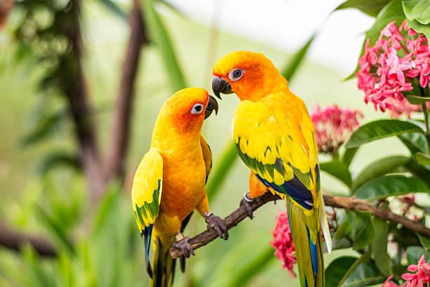 Colorful parrots picture id611185508?b=1&k=6&m=611185508&s=612x612&w=0&h=vsb 8 ba5vdadznfumh4g1wvchojlc4q1c95yd6viay=