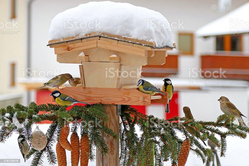 Colorful Passerine birds (The tits) stock photo