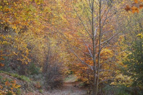 färgglada sökvägen till skogen i höst - bernkastel kues höst bildbanksfoton och bilder