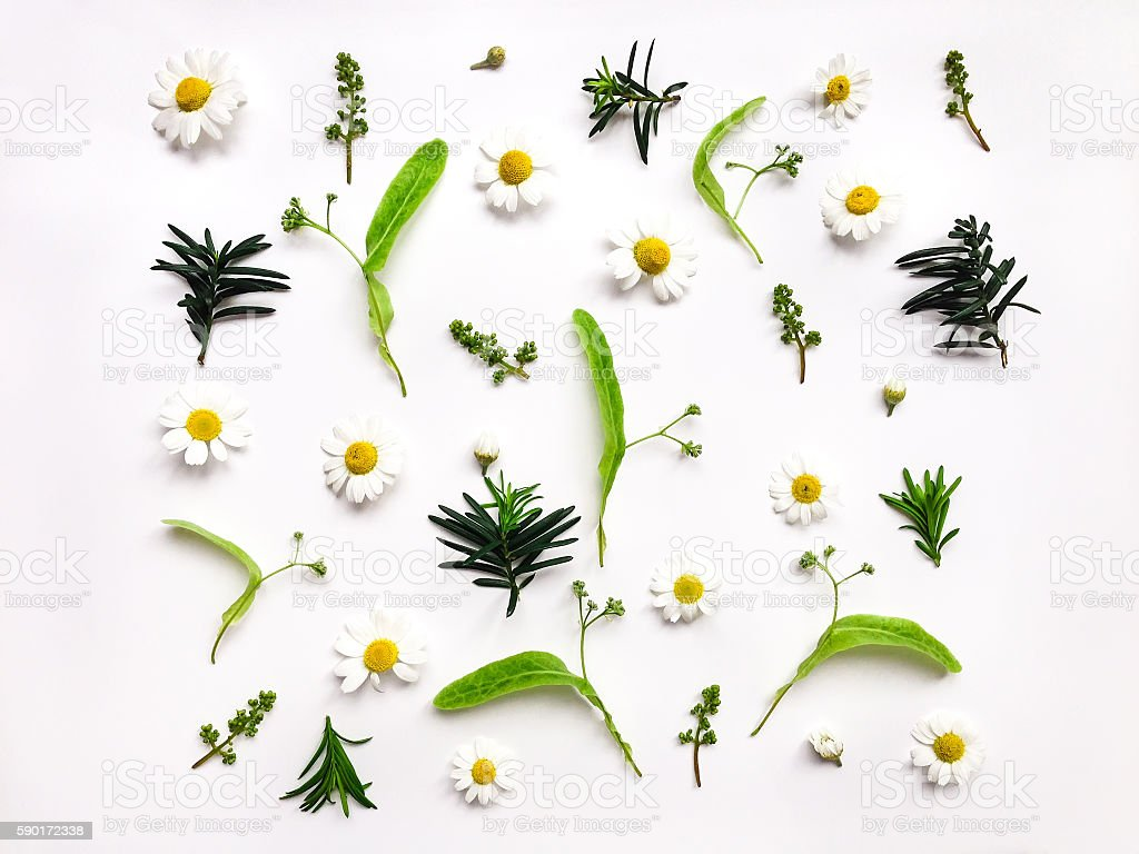 Colorful pattern of meadow plants on white background. Flat lay stock photo