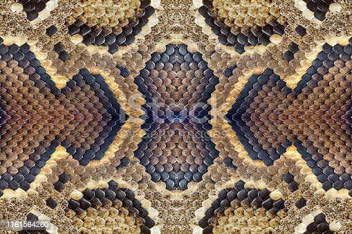 istock Colorful patterned skins of pythons. 1161564260