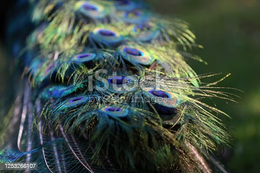 istock Colorful patterns of thousands of beautiful birds 1253266107